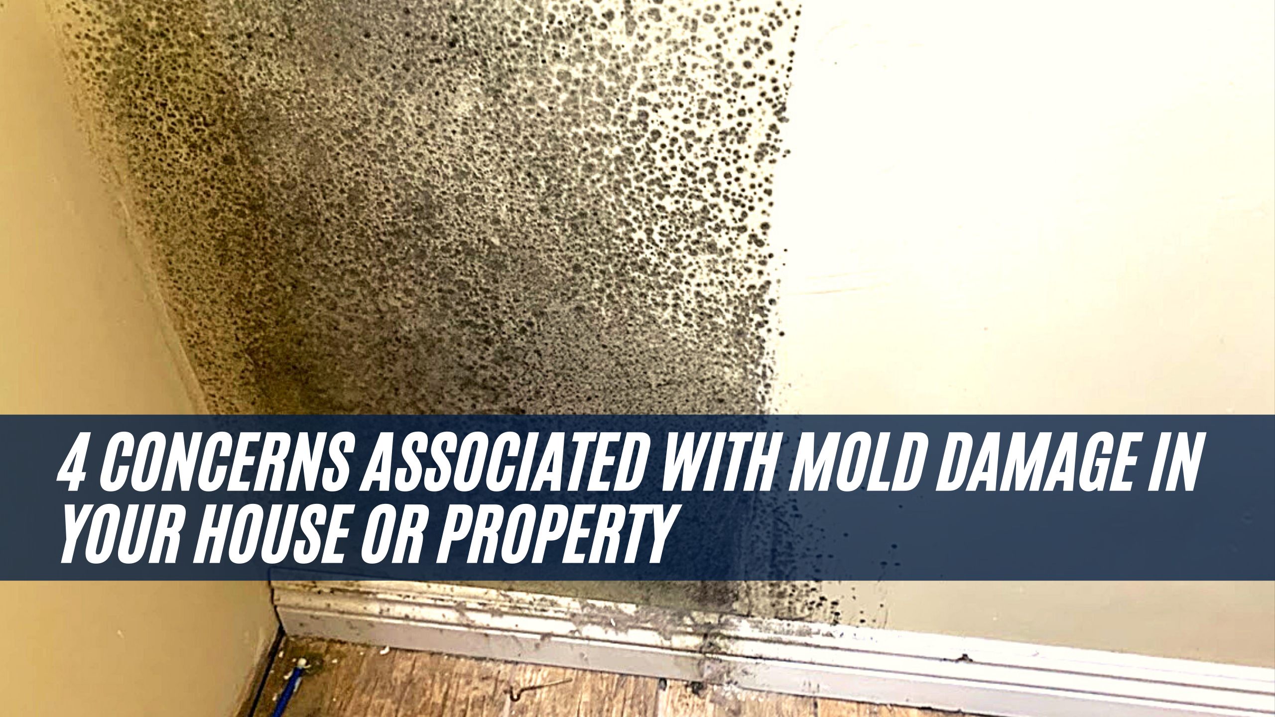 4 concerns associated with Mold damage in your House or Property