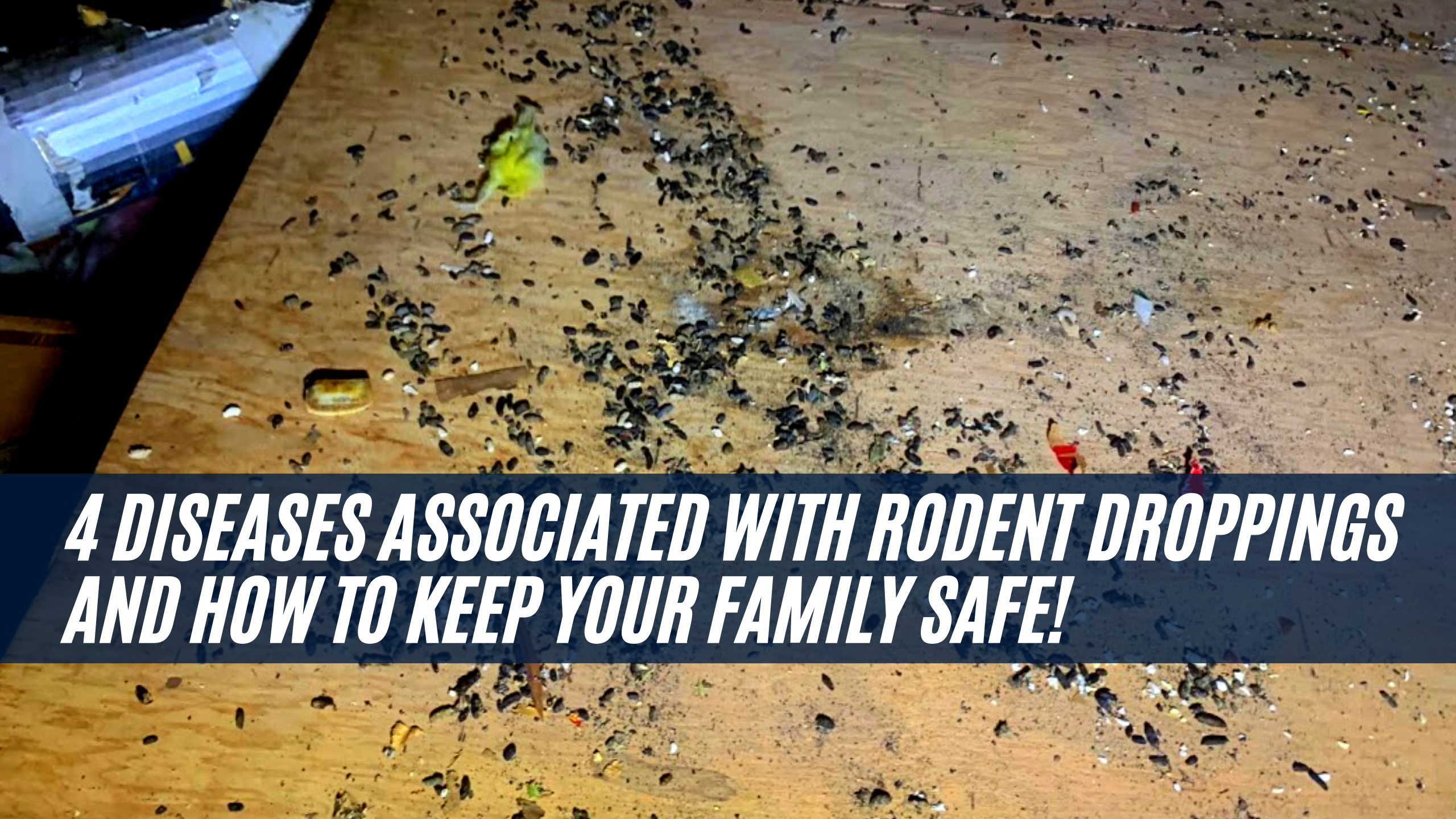 4 Diseases associated with rodent droppings and how to keep your family safe!