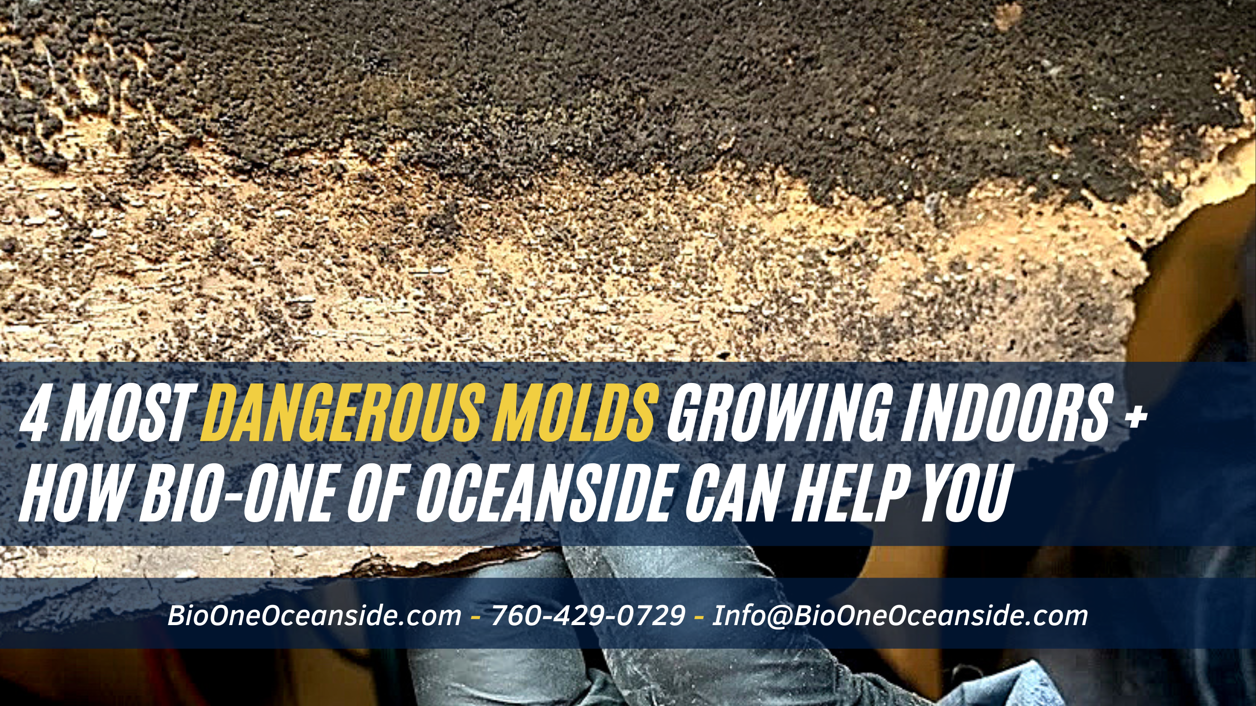 4 most dangerous molds growing indoors + How Bio-One can help you remove them!