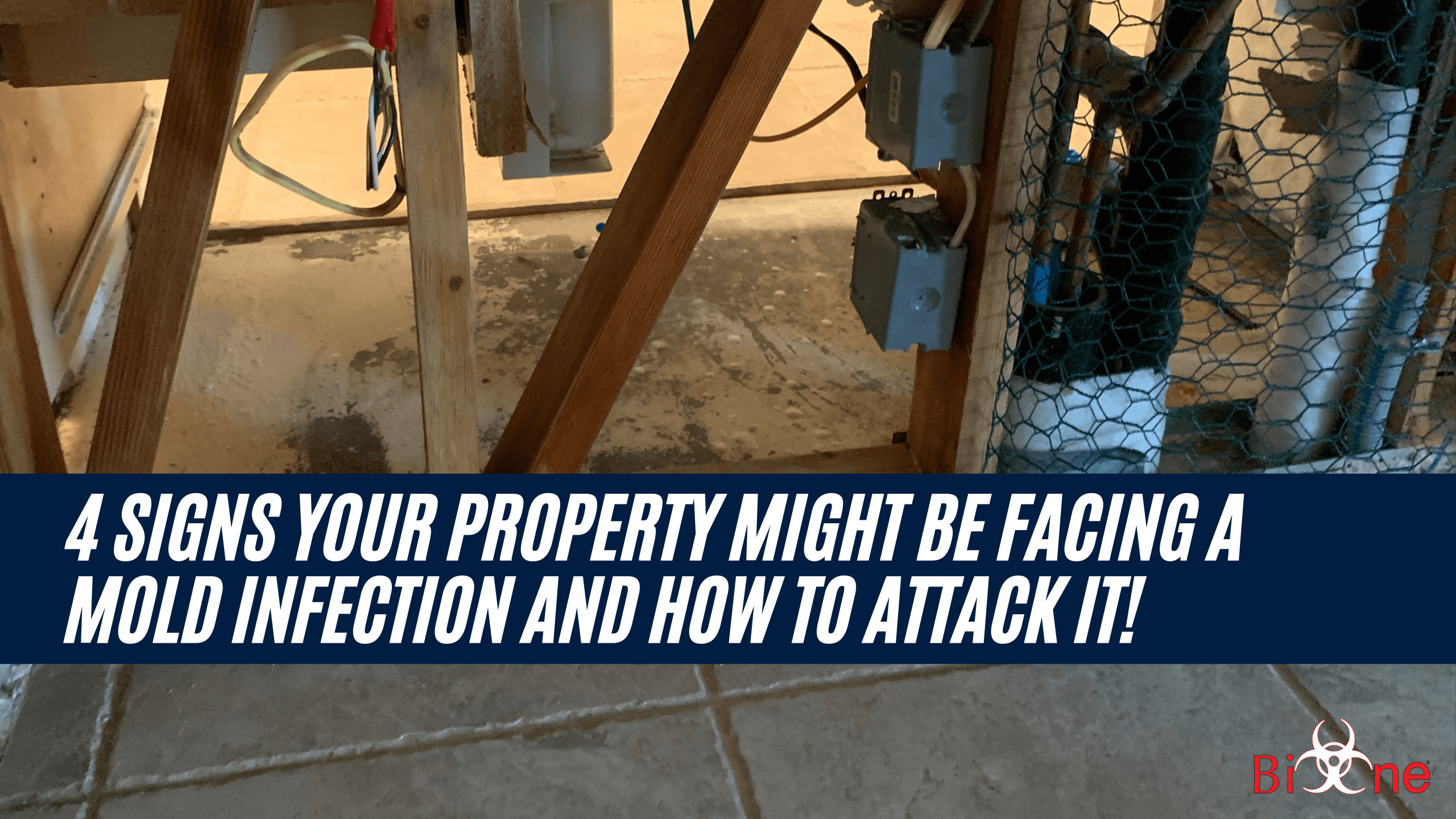 4 Signs your Property might be Facing a Mold Infection and How to attack it!